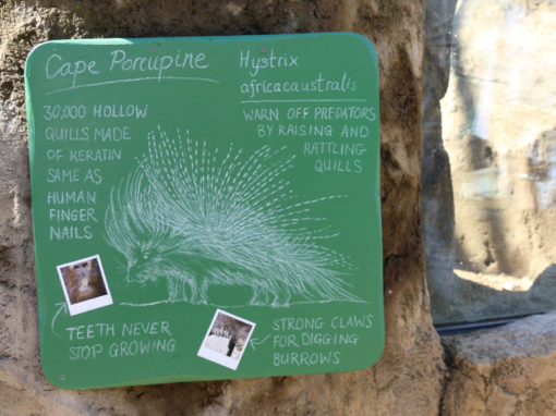 Auckland Zoo – Gate signages